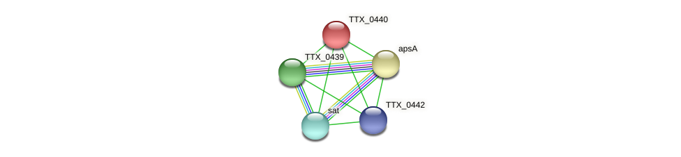 TTX_0440 protein (Thermoproteus tenax) - STRING interaction network