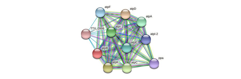 atpB protein (Thermoproteus tenax) - STRING interaction network