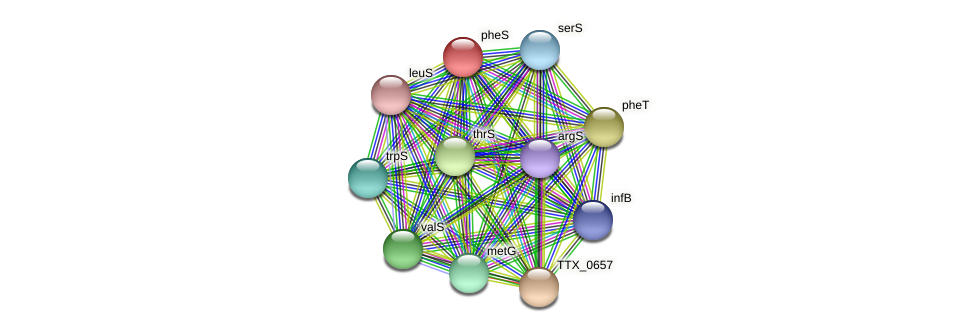 pheS protein (Thermoproteus tenax) - STRING interaction network