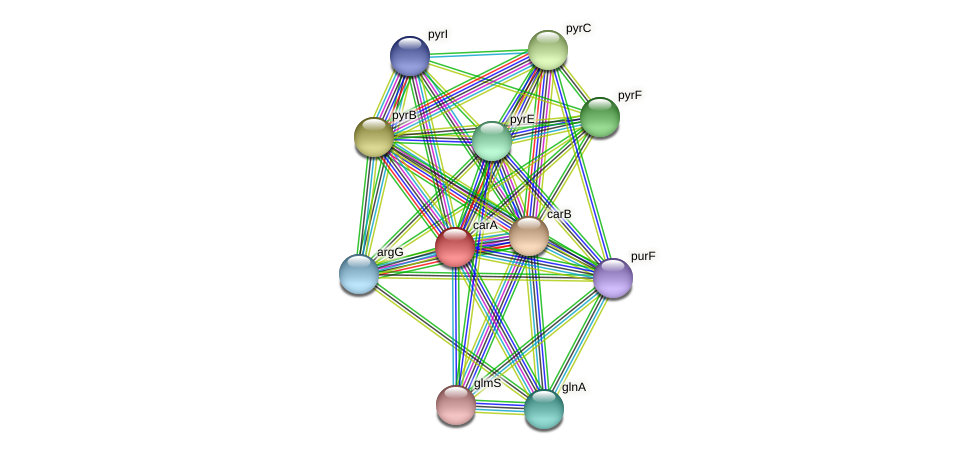 carA protein (Thermoproteus tenax) - STRING interaction network