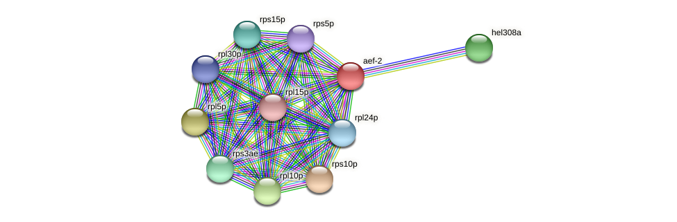 aef-2 protein (Thermoproteus tenax) - STRING interaction network