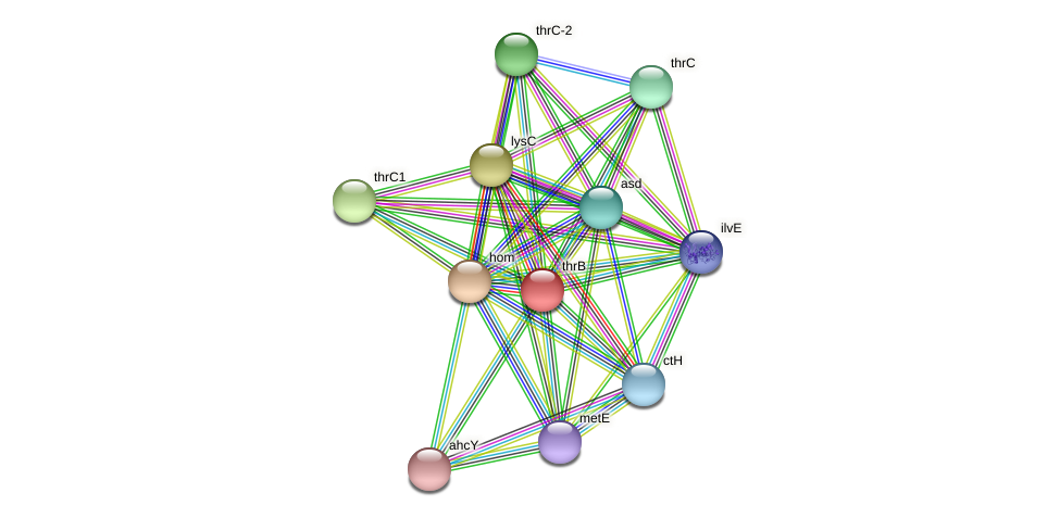 thrB protein (Thermoproteus tenax) - STRING interaction network