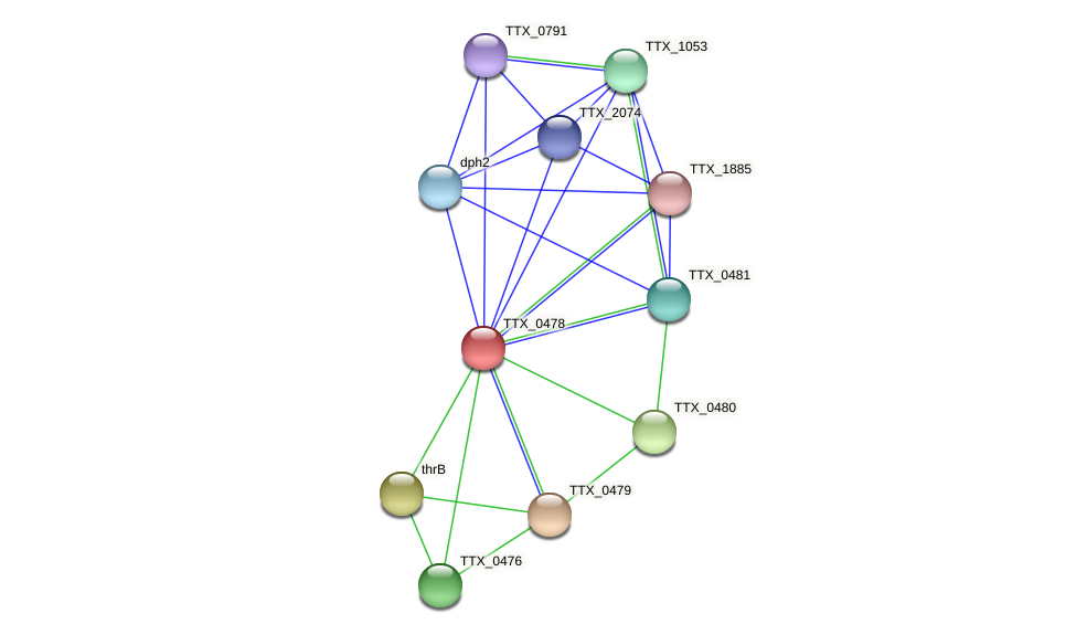 TTX_0478 protein (Thermoproteus tenax) - STRING interaction network