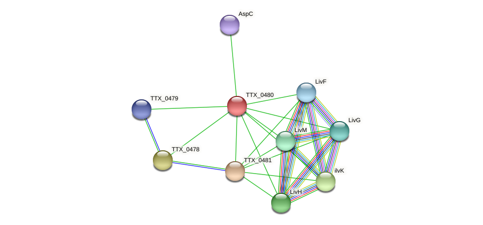TTX_0480 protein (Thermoproteus tenax) - STRING interaction network