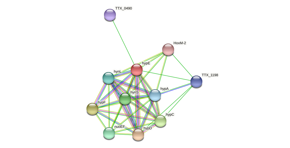 TTX_0489 protein (Thermoproteus tenax) - STRING interaction network