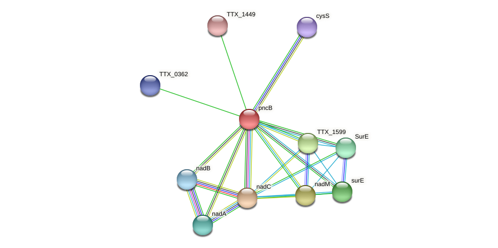pncB protein (Thermoproteus tenax) - STRING interaction network