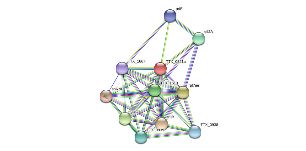 TTX_0521a protein (Thermoproteus tenax) - STRING interaction network