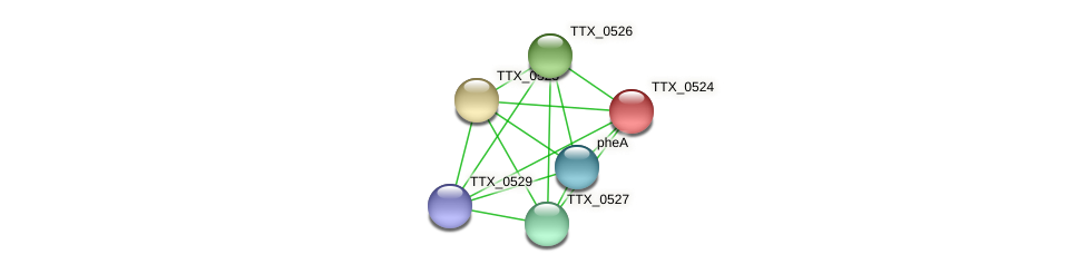 TTX_0524 protein (Thermoproteus tenax) - STRING interaction network
