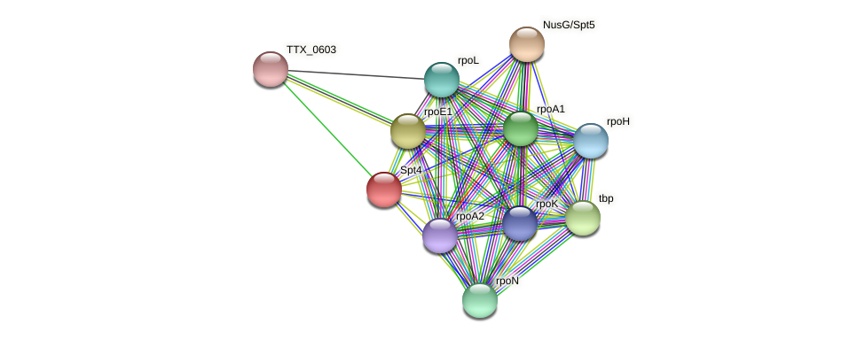Spt4 protein (Thermoproteus tenax) - STRING interaction network