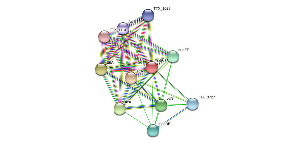 TTX_0730 protein (Thermoproteus tenax) - STRING interaction network