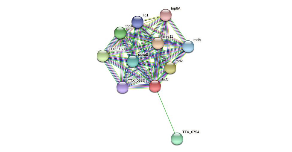 sbcC protein (Thermoproteus tenax) - STRING interaction network