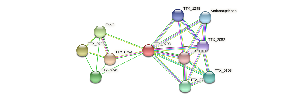 TTX_0793 protein (Thermoproteus tenax) - STRING interaction network