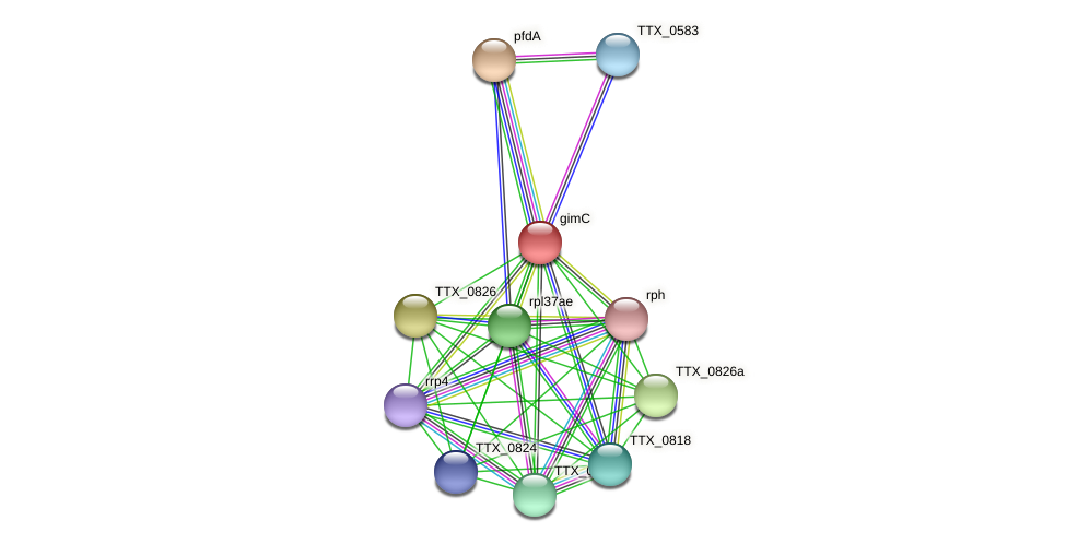 gimC protein (Thermoproteus tenax) - STRING interaction network