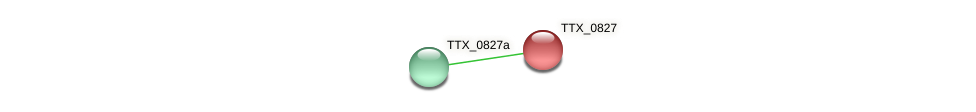 TTX_0827 protein (Thermoproteus tenax) - STRING interaction network