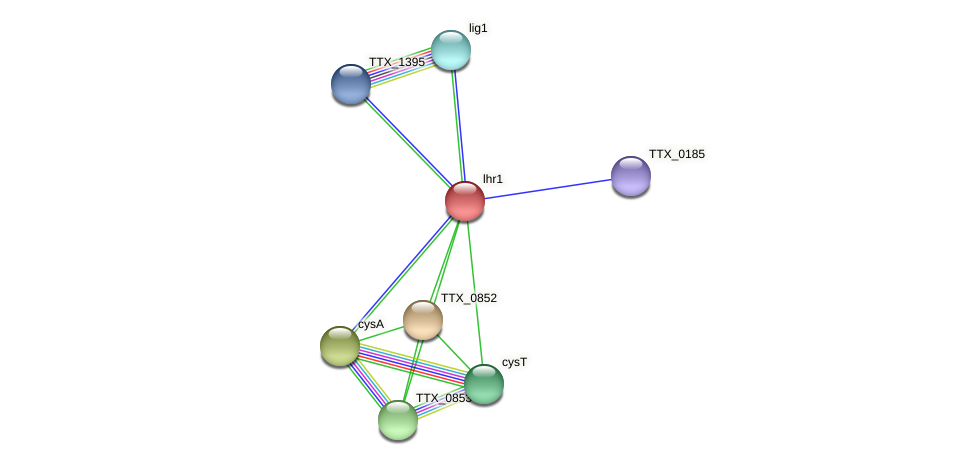 lhr1 protein (Thermoproteus tenax) - STRING interaction network