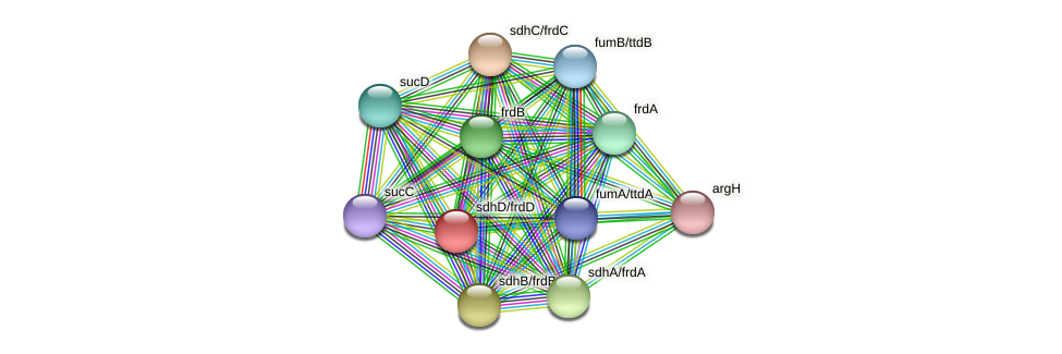 frdD protein (Thermoproteus tenax) - STRING interaction network