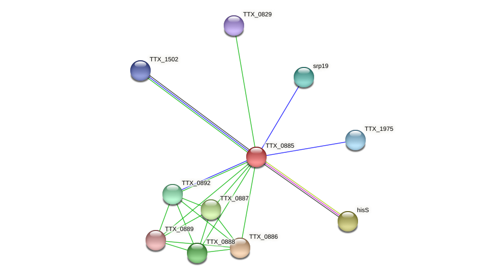 TTX_0885 protein (Thermoproteus tenax) - STRING interaction network