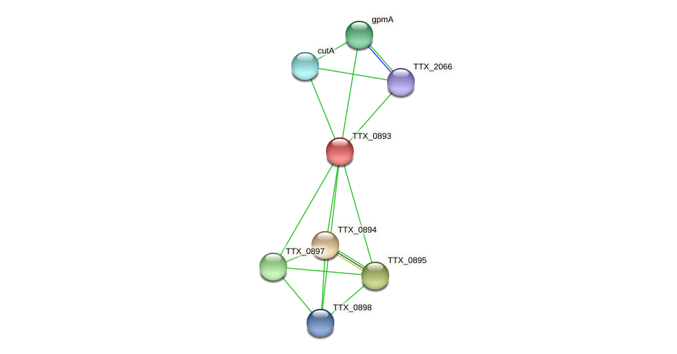 TTX_0893 protein (Thermoproteus tenax) - STRING interaction network