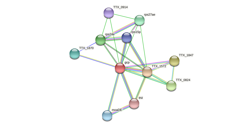 gcp protein (Thermoproteus tenax) - STRING interaction network