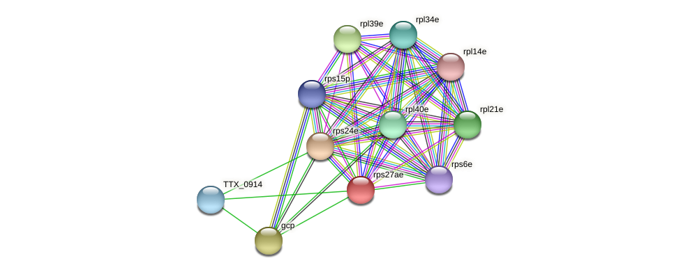 rps27ae protein (Thermoproteus tenax) - STRING interaction network