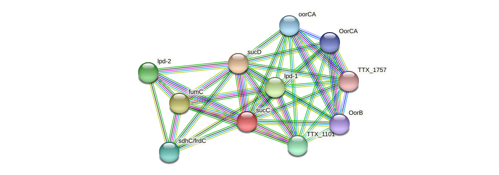 sucC protein (Thermoproteus tenax) - STRING interaction network