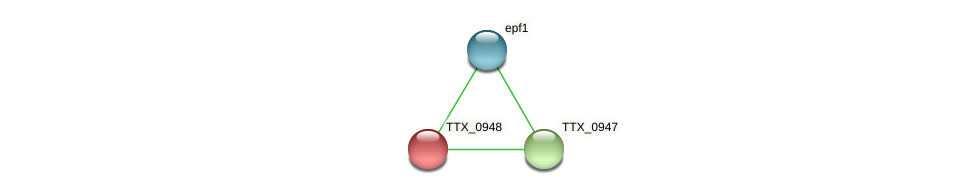 TTX_0948 protein (Thermoproteus tenax) - STRING interaction network