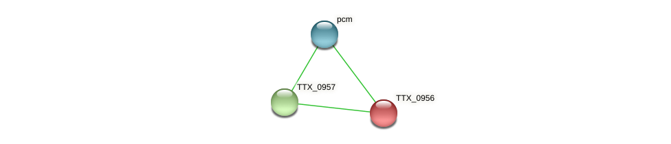 TTX_0956 protein (Thermoproteus tenax) - STRING interaction network