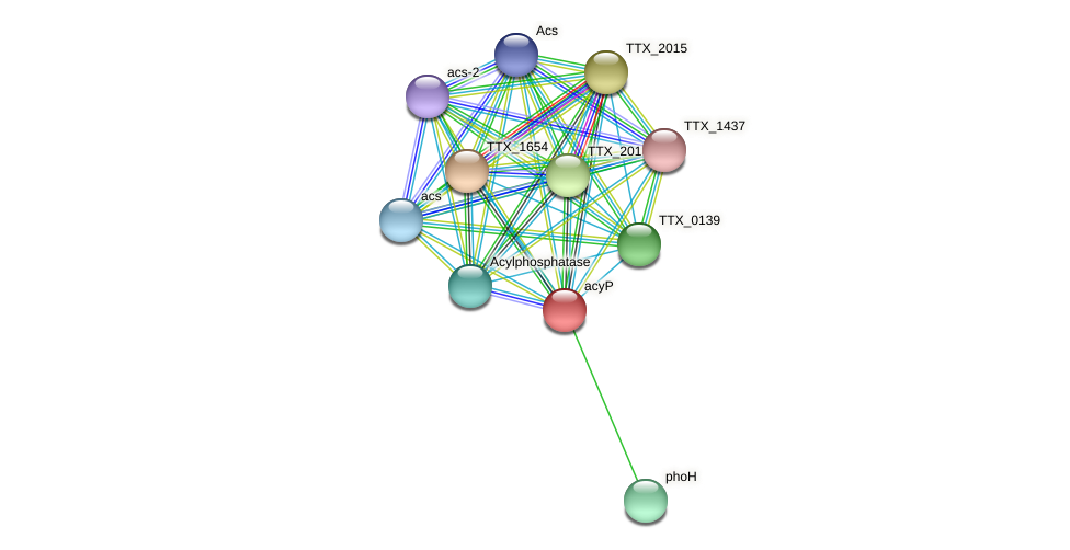 acyP protein (Thermoproteus tenax) - STRING interaction network