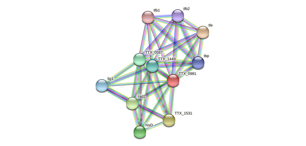 TTX_0981 protein (Thermoproteus tenax) - STRING interaction network