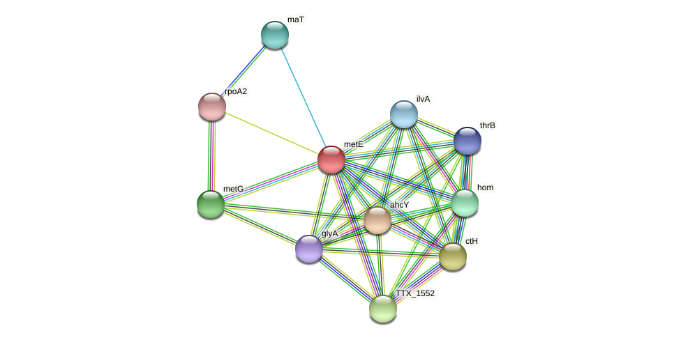 metE protein (Thermoproteus tenax) - STRING interaction network