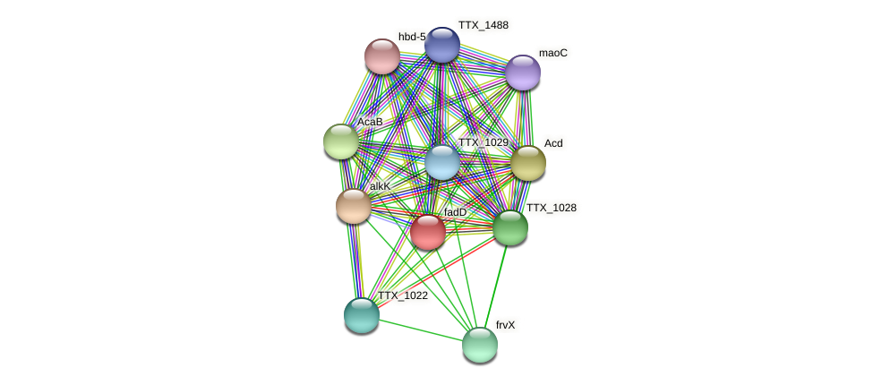 fadD protein (Thermoproteus tenax) - STRING interaction network