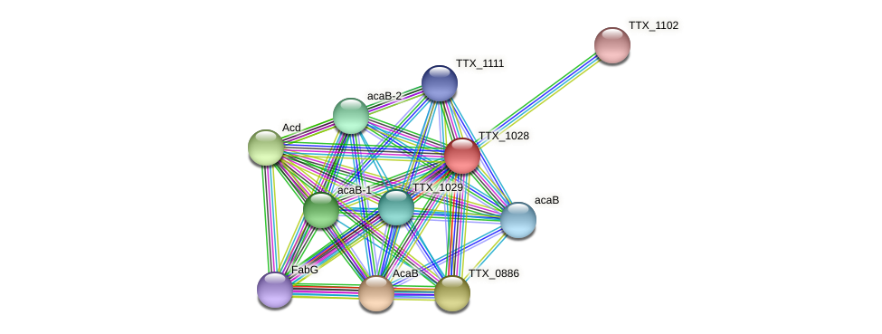 TTX_1028 protein (Thermoproteus tenax) - STRING interaction network
