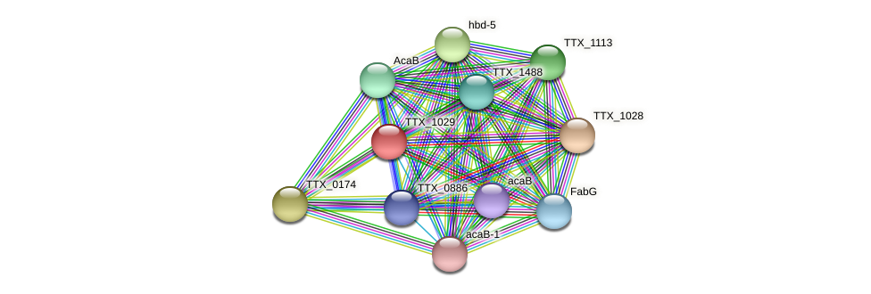 TTX_1029 protein (Thermoproteus tenax) - STRING interaction network