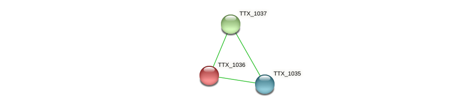 TTX_1036 protein (Thermoproteus tenax) - STRING interaction network