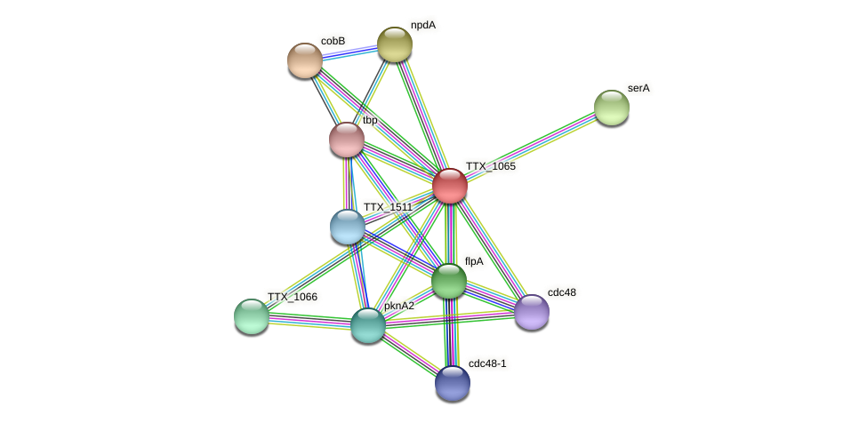 TTX_1065 protein (Thermoproteus tenax) - STRING interaction network