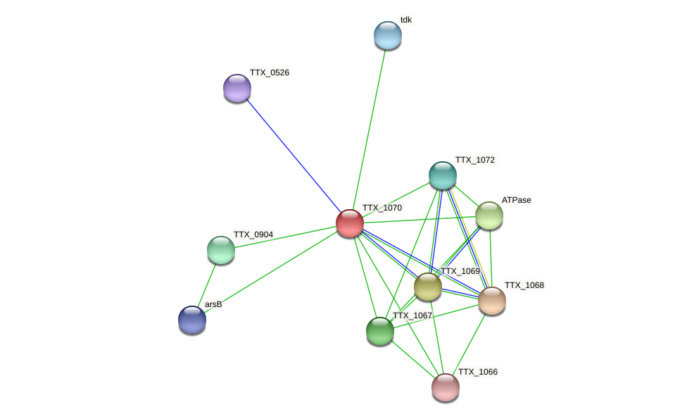 TTX_1070 protein (Thermoproteus tenax) - STRING interaction network