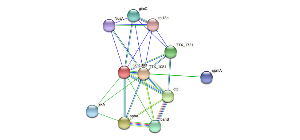 TTX_1080 protein (Thermoproteus tenax) - STRING interaction network