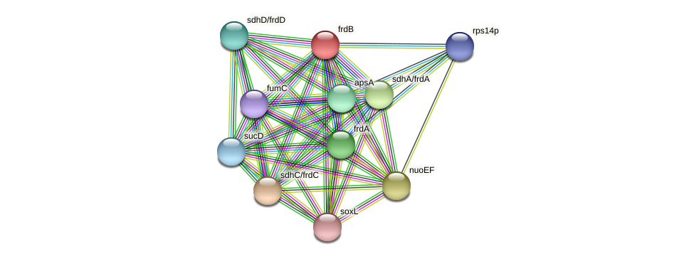 TTX_1105 protein (Thermoproteus tenax) - STRING interaction network