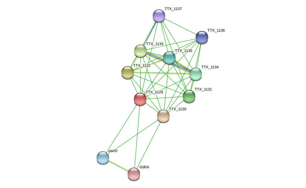 TTX_1129 protein (Thermoproteus tenax) - STRING interaction network
