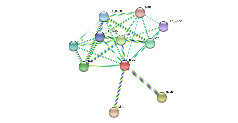 nrdD protein (Thermoproteus tenax) - STRING interaction network