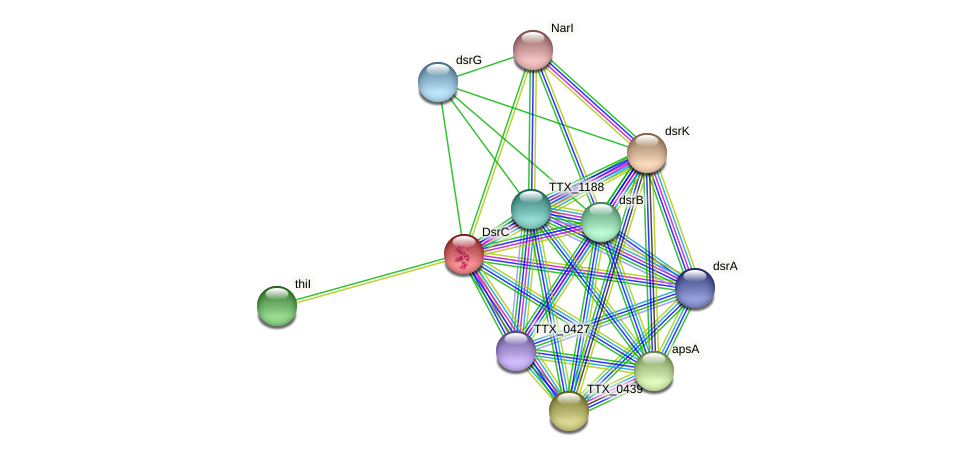 TTX_1185 protein (Thermoproteus tenax) - STRING interaction network