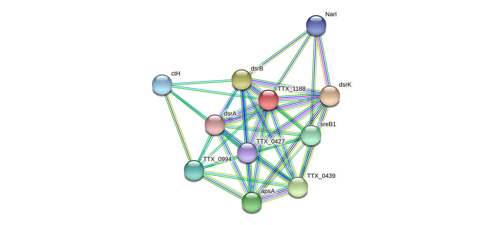 TTX_1188 protein (Thermoproteus tenax) - STRING interaction network