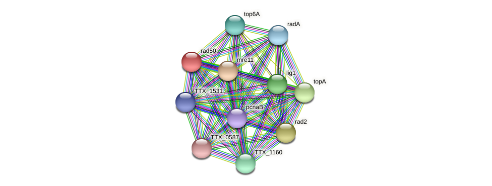 rad50 protein (Thermoproteus tenax) - STRING interaction network