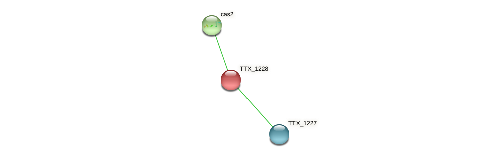 TTX_1228 protein (Thermoproteus tenax) - STRING interaction network