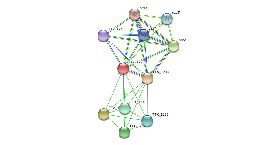 TTX_1230 protein (Thermoproteus tenax) - STRING interaction network