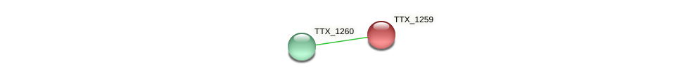 TTX_1259 protein (Thermoproteus tenax) - STRING interaction network