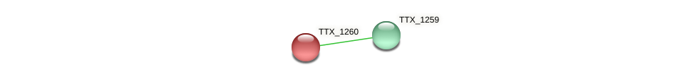 TTX_1260 protein (Thermoproteus tenax) - STRING interaction network