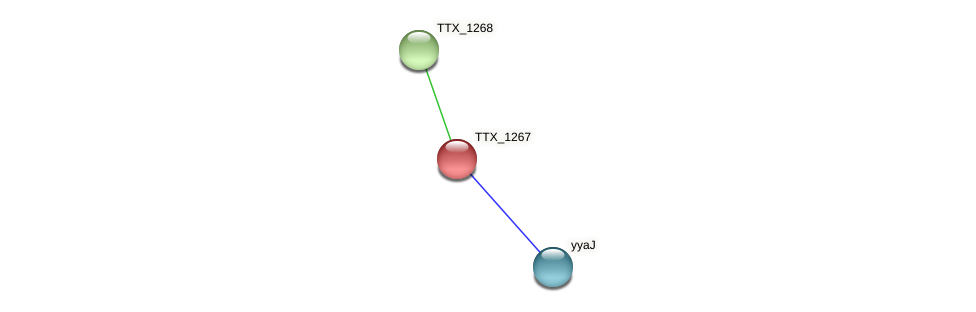 TTX_1267 protein (Thermoproteus tenax) - STRING interaction network