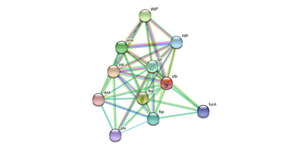 pfp protein (Thermoproteus tenax) - STRING interaction network