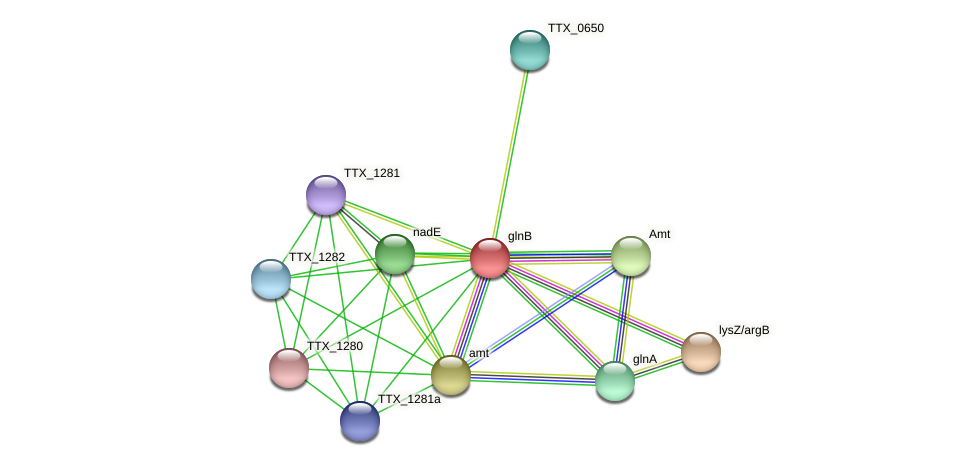 glnB protein (Thermoproteus tenax) - STRING interaction network